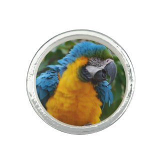 Fluffy Blue and Gold Macaw Rings