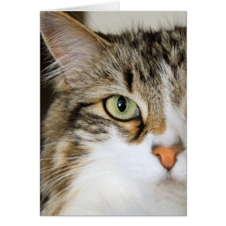Fluffy Cat Close up Card