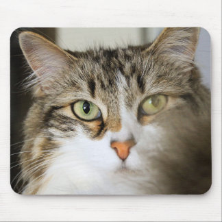 Fluffy Cat Close up Mouse Pads