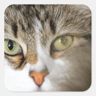 Fluffy Cat Close up Square Sticker