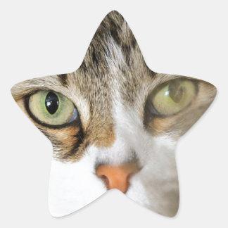 Fluffy Cat Close up Star Sticker