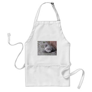 Fluffy cat sleeping crouch on the floor adult apron