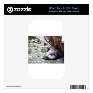 Fluffy cat sleeping crouch on the floor iPod touch 4G decal
