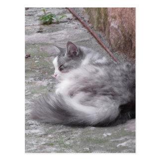 Fluffy cat sleeping crouch on the floor postcard