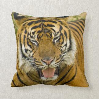 Fluffy Cat Throw Pillow