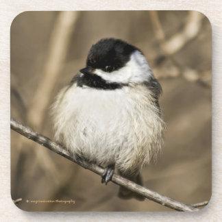 Fluffy chickadee - coaster