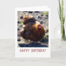 Fluffy chicken Birthday Card
