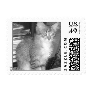 """Fluffy"" Custom Postage Stamp"