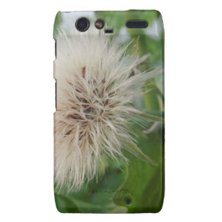 Fluffy Dandelion Droid RAZR Cases