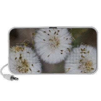 Fluffy Dandelions Notebook Speaker
