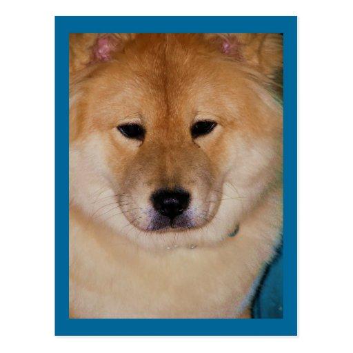 Fluffy Dog Postcards