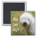 Fluffy Frizzy Bad Hair Day Dog Magnet