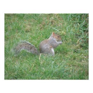 Fluffy Gray Squirrel Photo Print