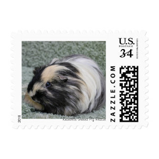 Fluffy Guinea Pig Stamps
