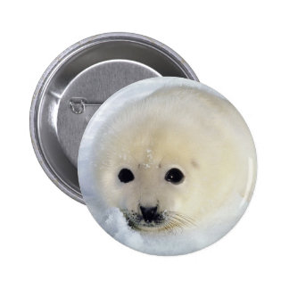 Fluffy Harp Seal Pup 2 Inch Round Button