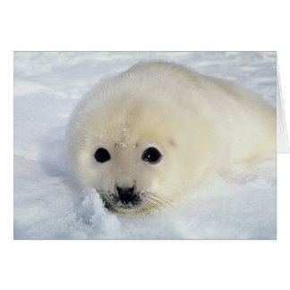 Fluffy Harp Seal Pup Greeting Card