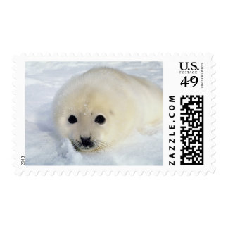 Fluffy Harp Seal Pup Postage Stamp