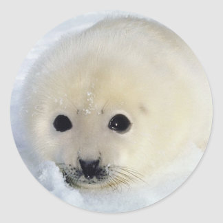 Fluffy Harp Seal Pup Round Stickers