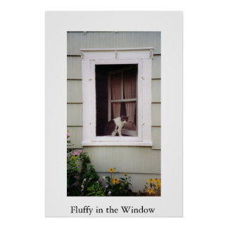 Fluffy in the Window Poster