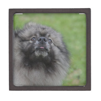 Fluffy Keeshond Premium Jewelry Boxes