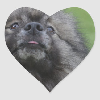 Fluffy Keeshond Stickers