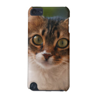 Fluffy Kitten iPod Touch (5th Generation) Case