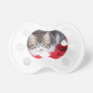 fluffy-kitten-on-red-rug pacifier
