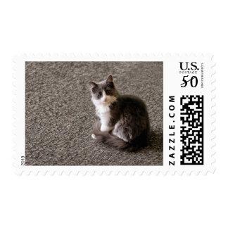 Fluffy kitten. postage
