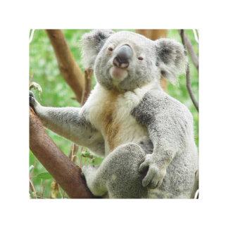 Fluffy Koala Canvas Print