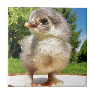 fluffy little chicken tile