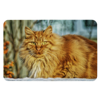 Fluffy Long-Haired Orange Manly Cat Magnet