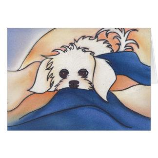 Fluffy Or Marilyn?  by Robyn Feeley Card