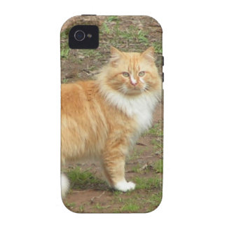 Fluffy Orange and White Kitty Vibe iPhone 4 Cases