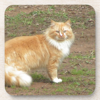 Fluffy Orange and White Kitty Coaster
