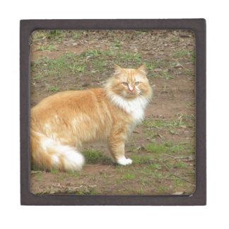Fluffy Orange and White Kitty Gift Box