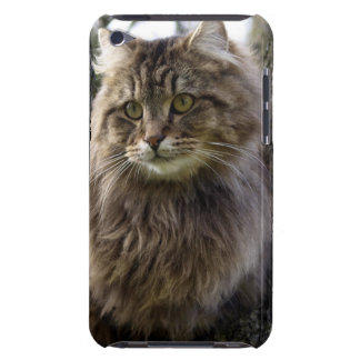 Fluffy Pet Cat Animal-lover Phone Case Case-Mate iPod Touch Case