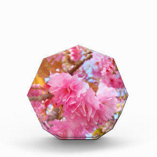 Fluffy Pink Cherry Blossoms Acrylic Award