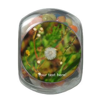 Fluffy plant jelly belly candy jars