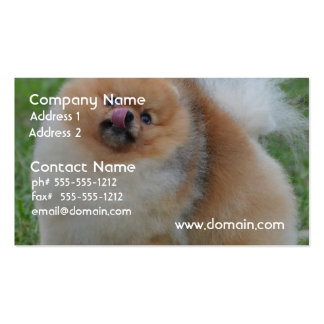 Fluffy Pomeranian Double-Sided Standard Business Cards (Pack Of 100)