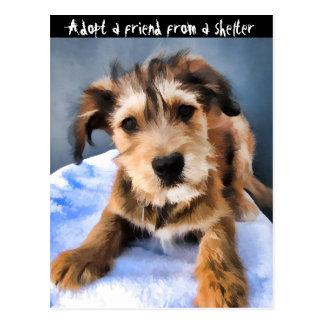 Fluffy Puppy 3855 Postcard