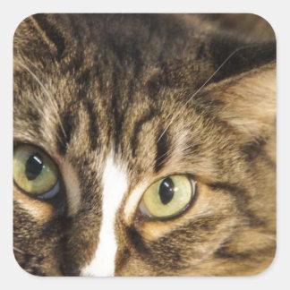 Fluffy Square Sticker
