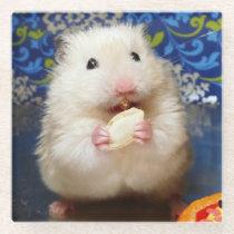 Fluffy syrian hamster Kokolinka eating a seed Glass Coaster