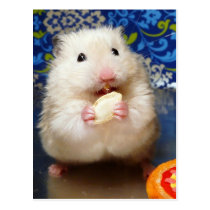 Fluffy syrian hamster Kokolinka eating a seed Postcard