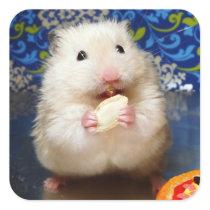 Fluffy syrian hamster Kokolinka eating a seed Square Sticker