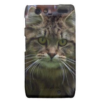 Fluffy Tabby Maine Coon Cat Cell Phone Case Droid RAZR Covers