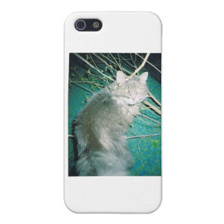 Fluffy The Maine Coon Case For iPhone SE/5/5s
