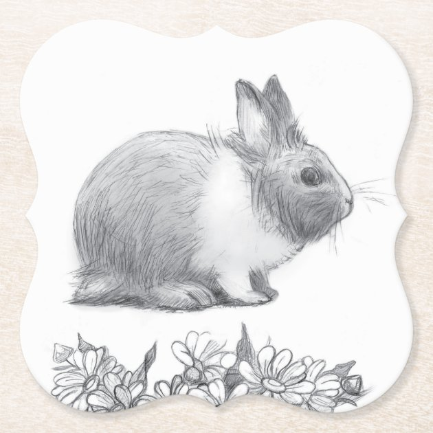 Fluffy The Rabbit Pencil Drawing Paper Coaster Zazzle Com
