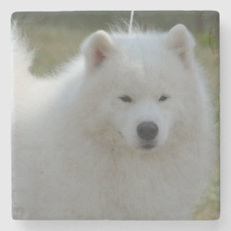 Fluffy White American Eskimo Dog Stone Coaster