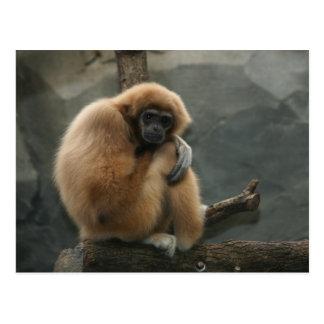 Fluffy white-handed lar gibbon postcard