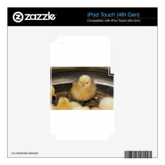 Fluffy Yellow Baby Chick Decals For iPod Touch 4G